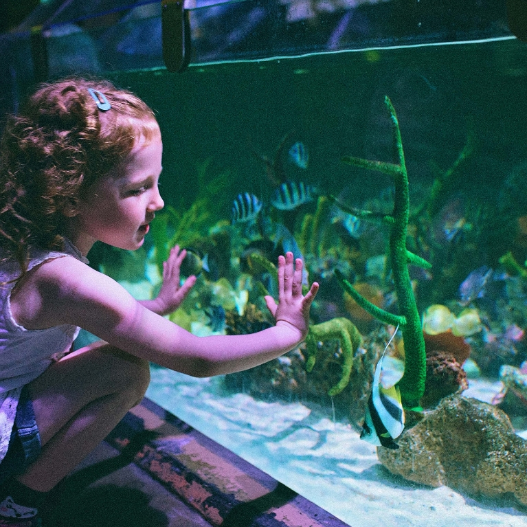 Deep Sea World & The Kelpies, From £25ppBook Now