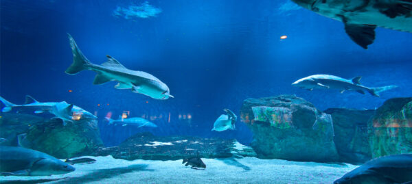 deep-sea-world-and-the-kelpies-thorne-experience