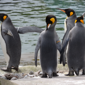 edinburgh zoo thorne travel