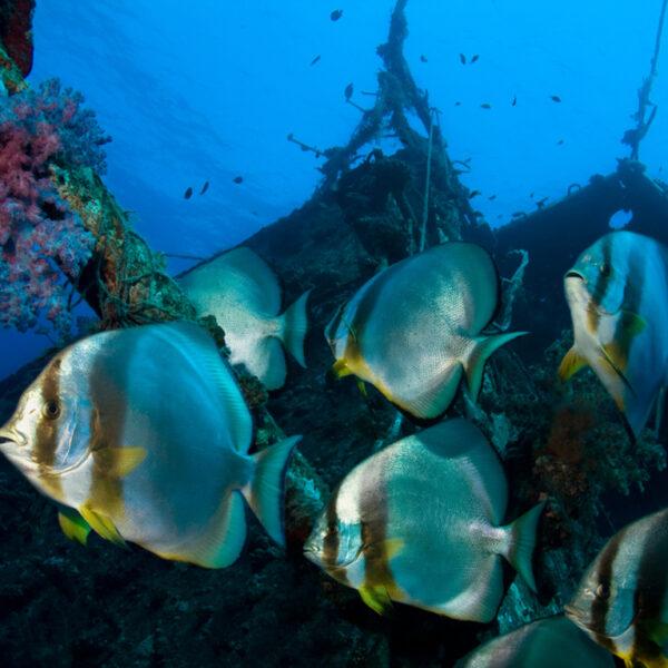 deep sea world thorne travel
