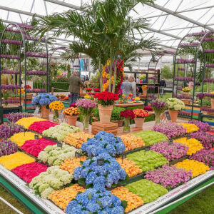 chelsea-flower-show-thorne-experience