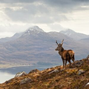 stag-horizon-thorne-travel-kilwinning-ayrshire-travel-agents