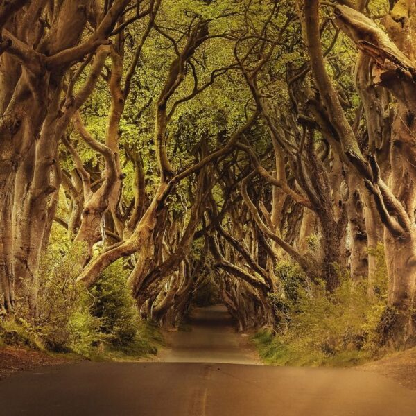 Belfast, Titanic, Game of Thrones Thorne Travel Experience (2)
