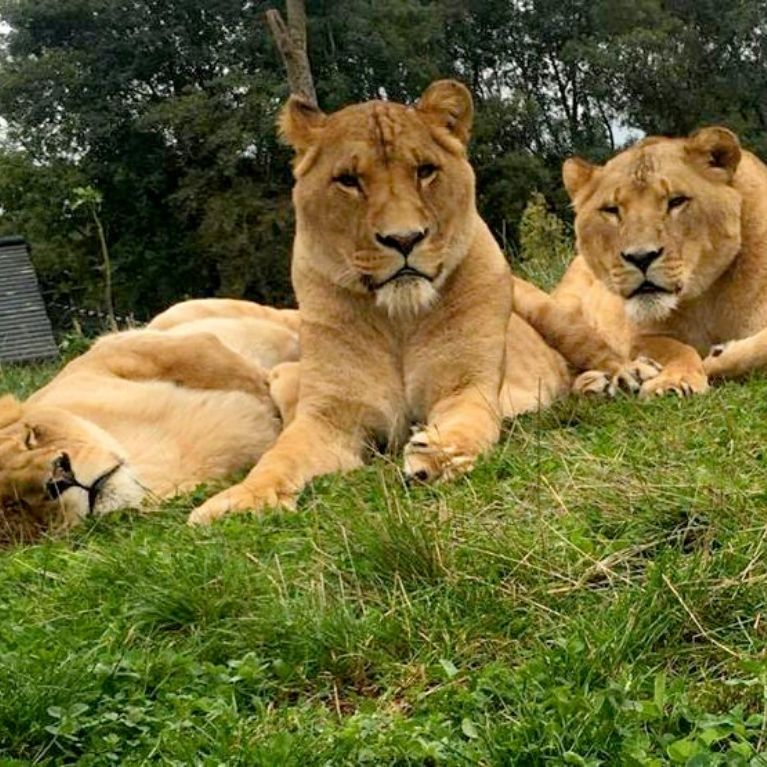 Easter Madness at Five Sisters Zoo, From £28pp Masthead Image